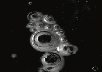 A cell-like abstract image