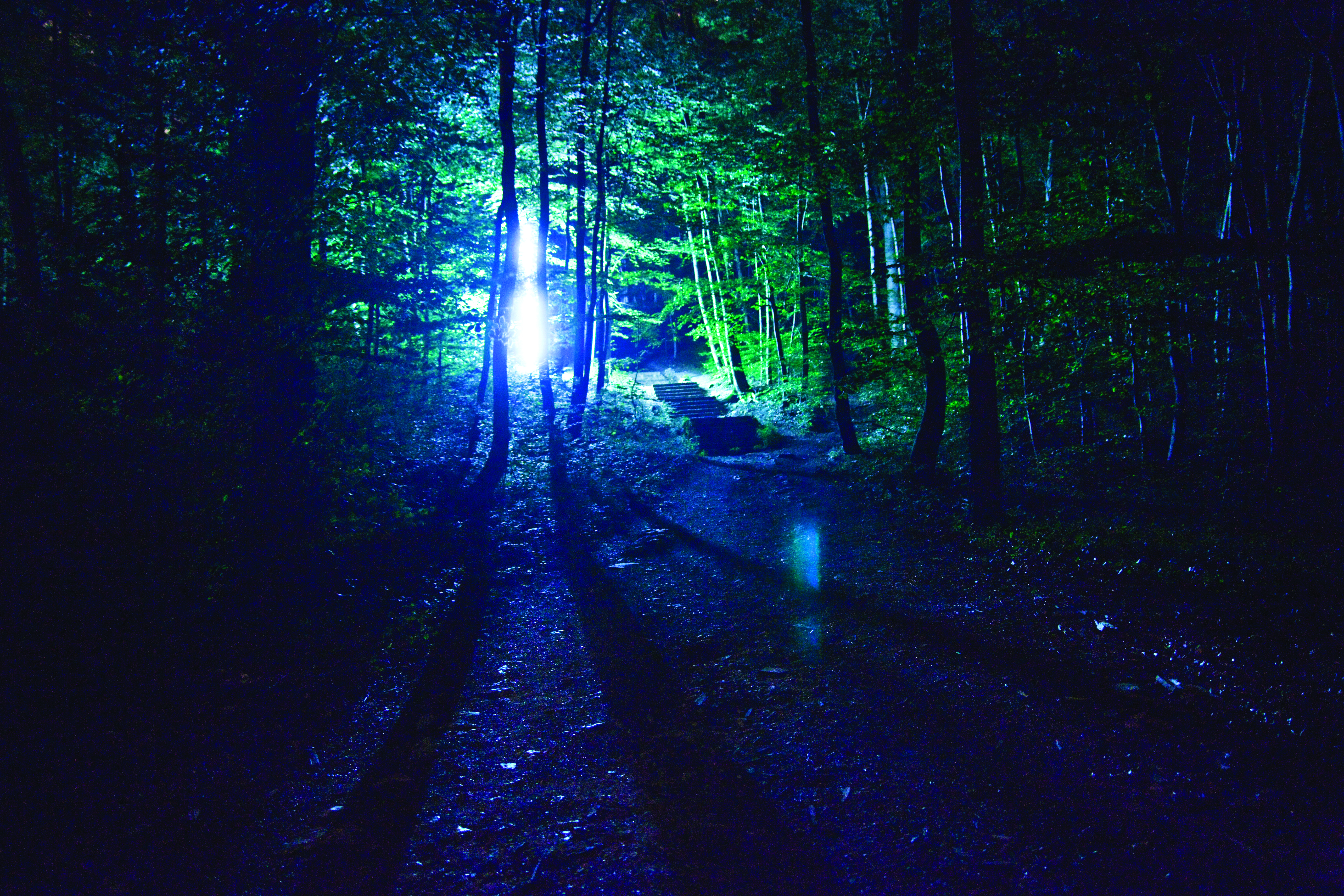 image of a forest dramatically backlit at night from Mette Ingvartsen's The Light Forest PRoject